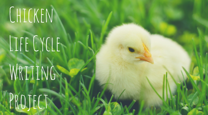 Chicken Life Cycle Writing Project